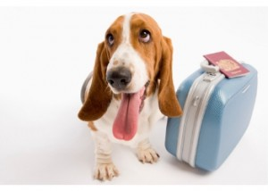 A Detailed Guide to Pet Relocation | IKAN Relocations
